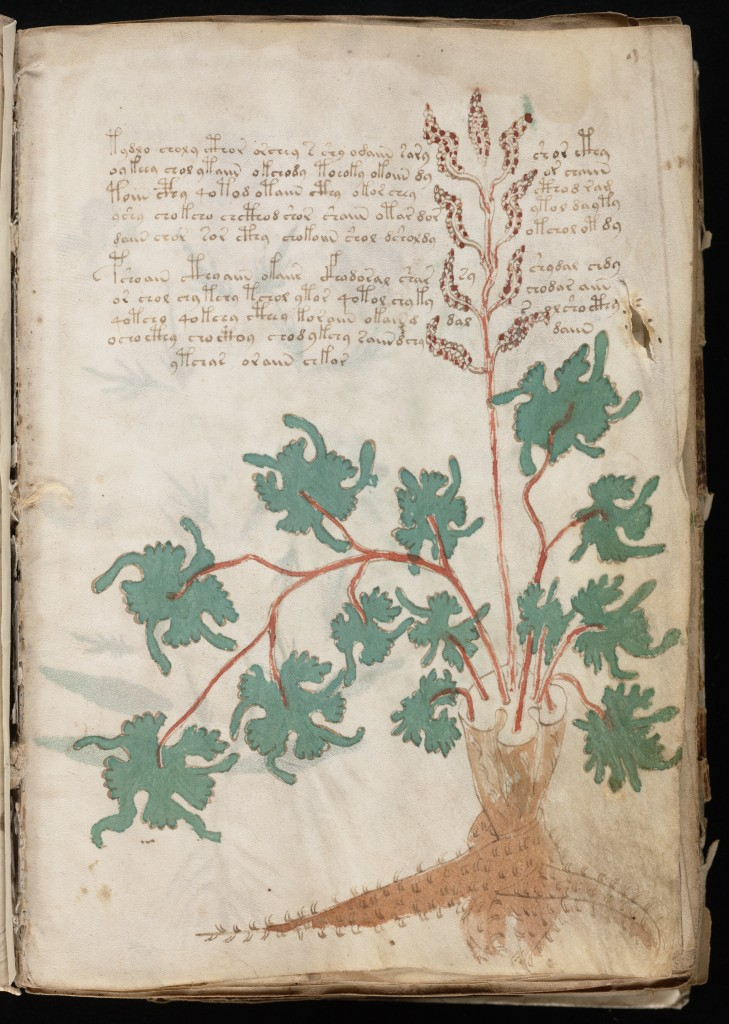 Voynich Manuscript - page 9r